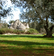 PERFECT LANSCAPE Parco del Negroamaro is located in the most beautiful side of Salento in Puglia, very south of Italy, we offer a new masseria building inlcuding the best features in the real estate market to give you a VIP comfort and VIP real estate investment... We are the land owners and leaders in Salento Real Estate business... we are looking for realtors who wants to increase their real estate business in Italy, because this is just the starting point of our MASSERIA PROJECT IN SALENTO... Own your future in the magic area of Salento Puglia